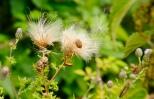 Insectes_Couleur 100_1