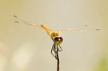 Insectes_Couleur 107
