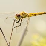 Insectes_Couleur 108