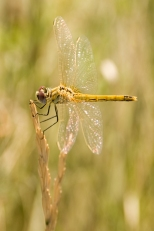 Insectes_Couleur 109