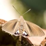 Insectes_Couleur 112