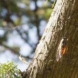 Insectes_Couleur 113