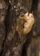Insectes_Couleur 114