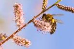 Insectes_Couleur 117