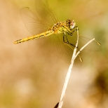 Insectes_Couleur 121