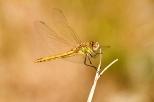Insectes_Couleur 122