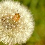 Insectes_Couleur 136_1