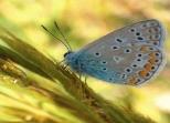 Insectes_Couleur 137_1