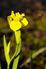 Insectes_Couleur 139_1