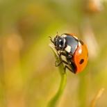 Insectes_Couleur 141_1
