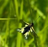 Insectes_Couleur 143_1