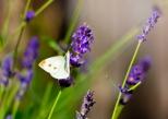 Insectes_Couleur 145_1