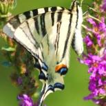 Insectes_Couleur 146_1