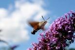 Insectes_Couleur 147_1