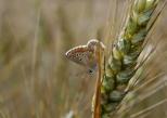 Insectes_Couleur 148_1