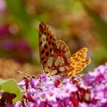 Insectes_Couleur 149_1