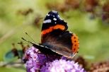 Insectes_Couleur 150_1