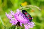 Insectes_Couleur 151_1