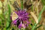Insectes_Couleur 152_1