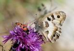 Insectes_Couleur 153_1