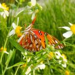 Insectes_Couleur 155