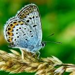Insectes_Couleur 157_1
