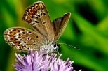 Insectes_Couleur 158_1