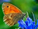 Insectes_Couleur 159_1