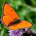 Insectes_Couleur 160_1
