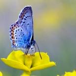Insectes_Couleur 164_1