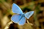 Insectes_Couleur 166_1