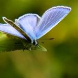 Insectes_Couleur 167_1