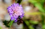 insectes_couleur-168_1_écaille rouge