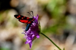insectes_couleur-169_1_hesperie