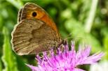 Insectes_Couleur 170_1