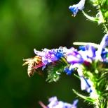 Insectes_Couleur 172_1