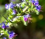 Insectes_Couleur 173_1
