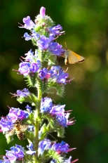 Insectes_Couleur 174_1