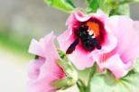Insectes_Couleur 176_1