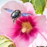 Insectes_Couleur 179
