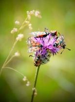 Insectes_Couleur 186_1