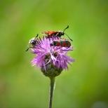 Insectes_Couleur 187_1