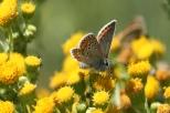 Insectes_Couleur 190_1