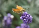 Insectes_Couleur 191_1