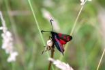 Insectes_Couleur 197_1