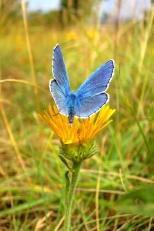 insectes_couleur-199_1