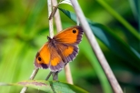 insectes_couleur-201_1