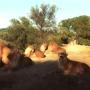 lions_001_1