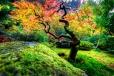 Jardin Japonais - Genève