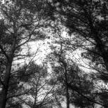 Paysages_NB 010_1